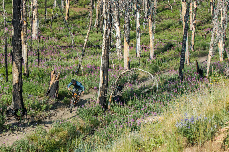 The burn area has created new opportunities for wildflowers, and it's a pretty amazing landscape to ride through.