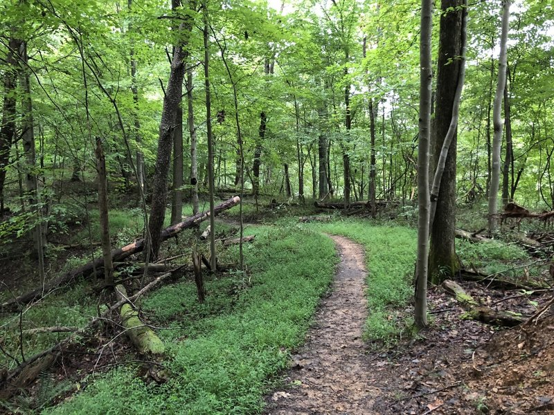 Lost Trail -- Beech Fork State Park