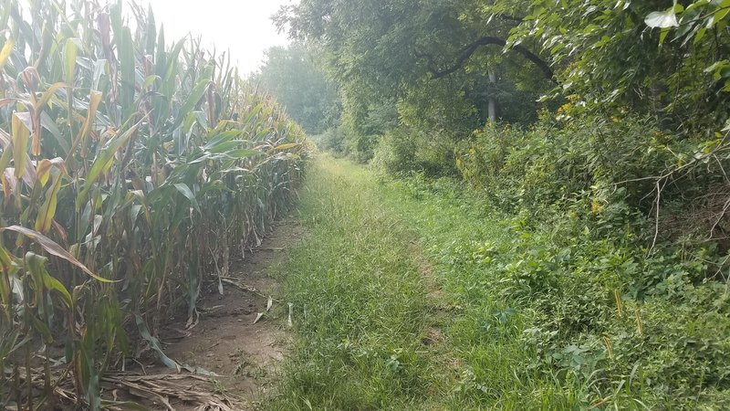 Ryan's elbow goes around the college's cornfield. Most of the lowland Trails were very overgrown when I rode on August 19th 2018. There were a lot of burs and poison ivy throughout the entire trail system.