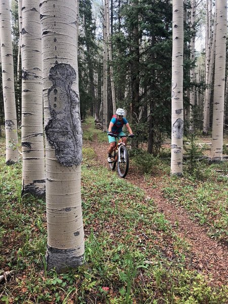 Amazing aspens on Salt Creek Trail