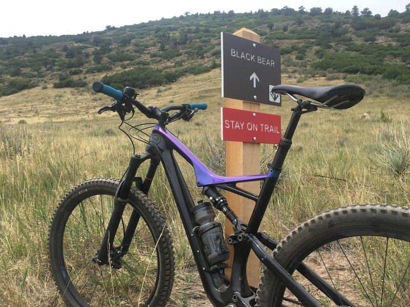 Starting up the Black Bear Trail