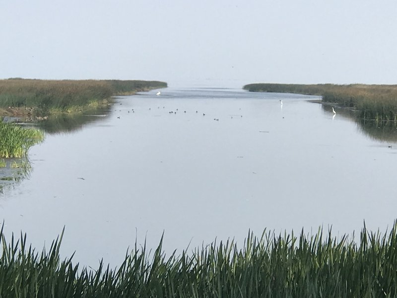 The Marsh. On a clear day, the Cascades are Visible in the Background