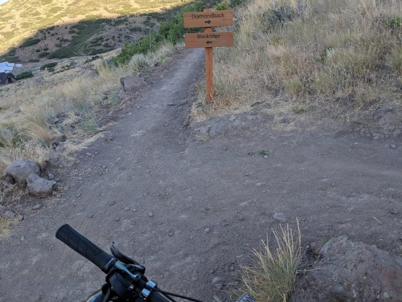 Fork in the trail