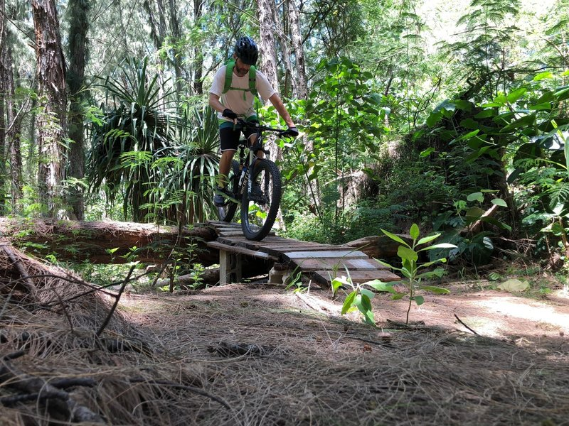 We don't cut trees, we build ramps to ride over!