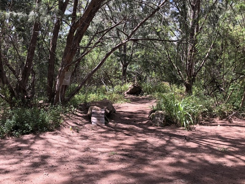Entrance to Tree Tables Trail with tricky rock ramp