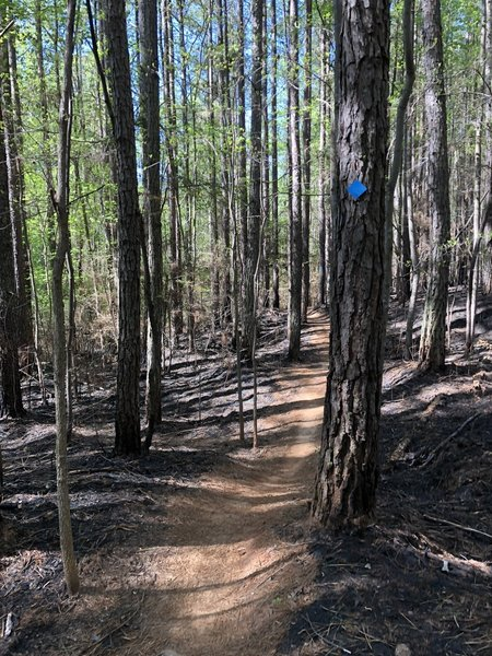April after a controlled burn on Wildlife
