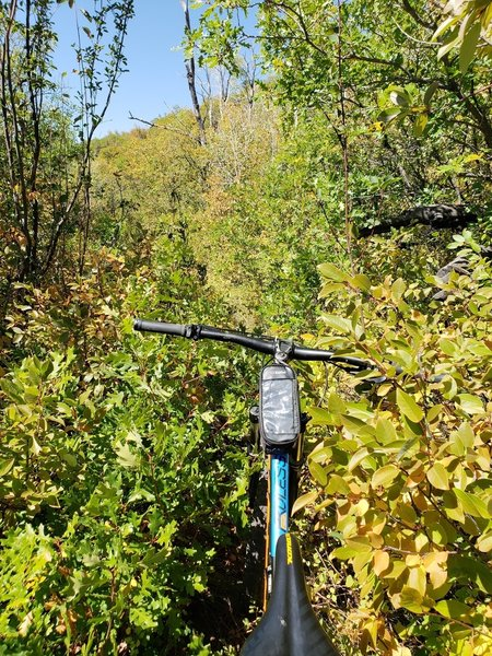 "Navigating through the thorns of ""Coal Creek"""