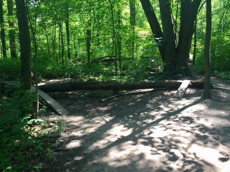 some skinnies and log piles