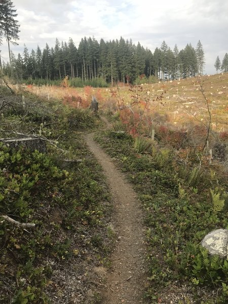 Heading back toward the tall trees on Lost Valley trail. Fall colors are beginning to show in the clear cut.