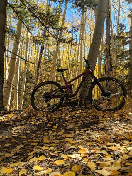 Autumn foliage brings incredible colours to accent this lovely trail.
