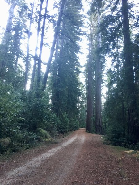 Riding in the shadow of redwoods on Gazos Creek Road