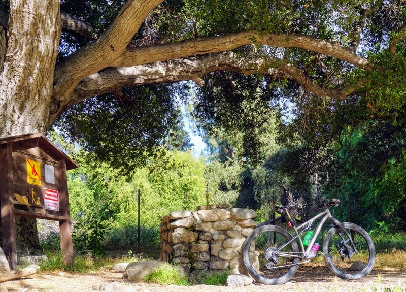 After a long ride, this oak-shaded drinking fountain has cool, refreshing mountain spring water on tap.