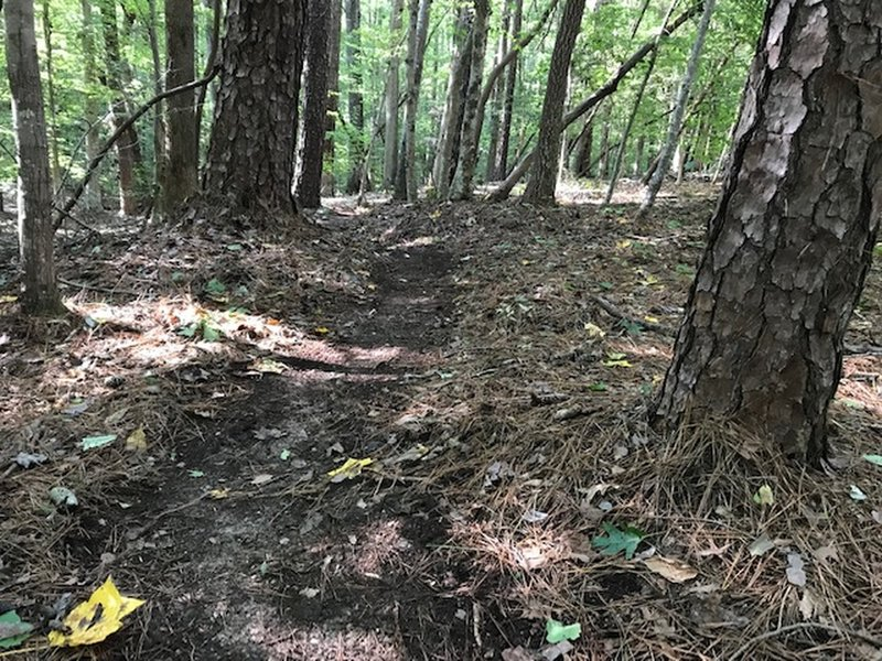 Woods trails at Buck Spring Plantation