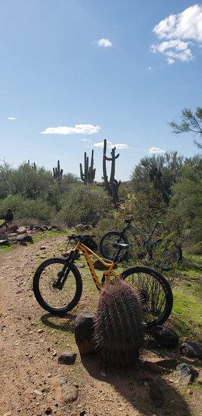 This is a 'green' rating at it's finest. Esplanade Trail. Fast, flowy, XC fun!