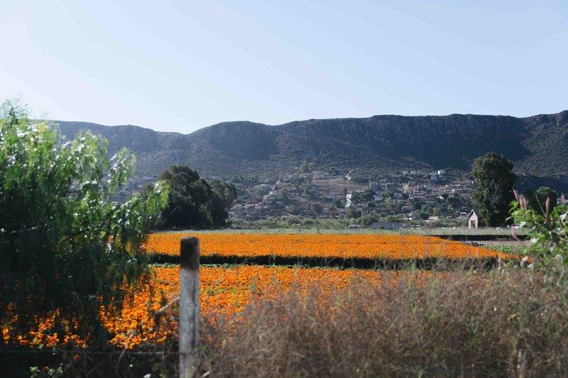 Flower Field on Ruta Del Gravel Route.