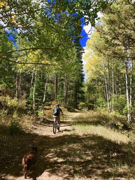 Riding up Sherwood Loop through aspen on Chris Mountain.