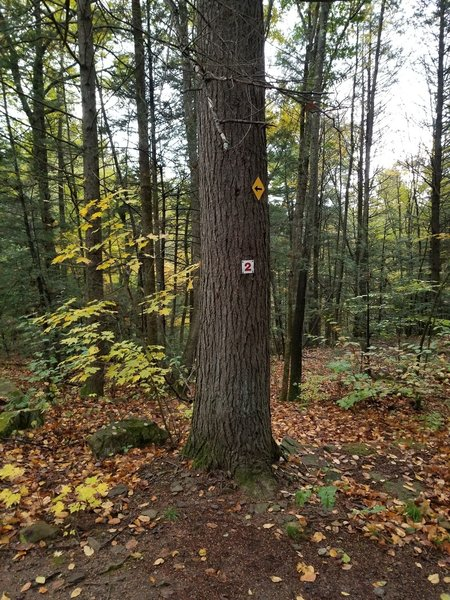 markers/blazes of main trails