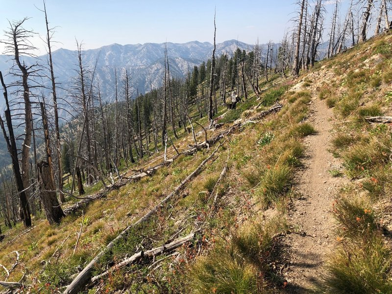 shortly after this the trail drops straight off the ridge to the bottom of the mountains. Steep!