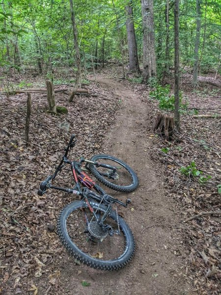 Cross Country Trails surrounded by Timber.