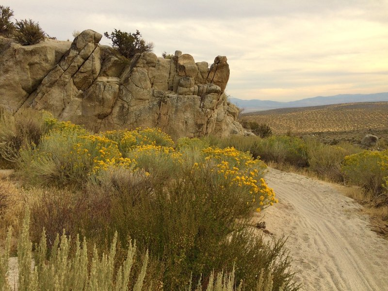 Riding down from Knob Point, the trail disappears behind blooming sage brush and big rock formations.