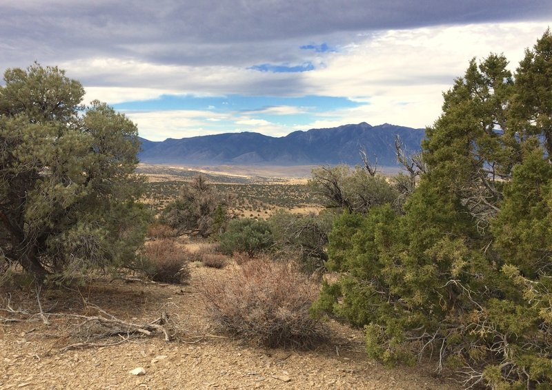 A view of the Carson Range looking between a pinyon pine on the left and a juniper on the right.