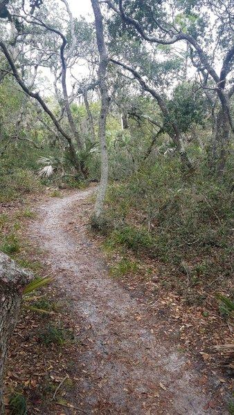 Nice Flowy trail through scrub forest.