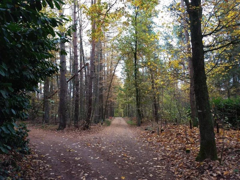 Dijkakkerweg in Autumn