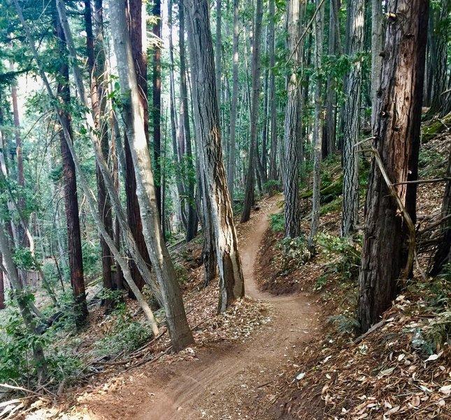 Flow Trail, start of Segment 2.