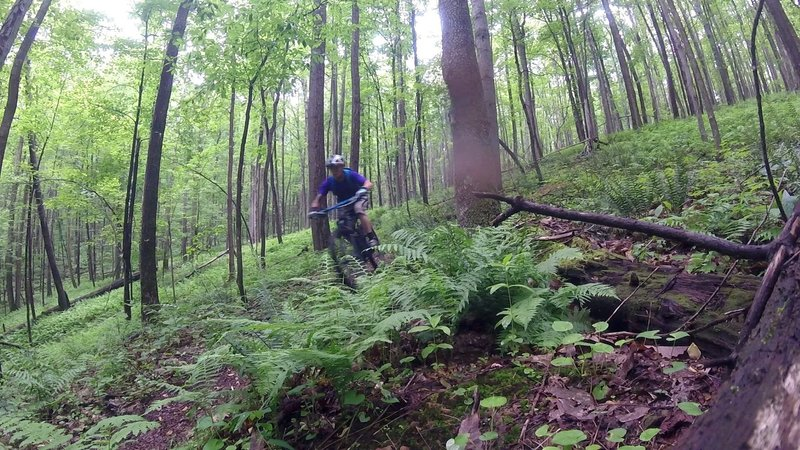Brocker Trail is great in all weather conditions.