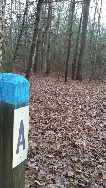 Intersection of P-A-K on the mountain bike trails in the Allegan State Game Area.