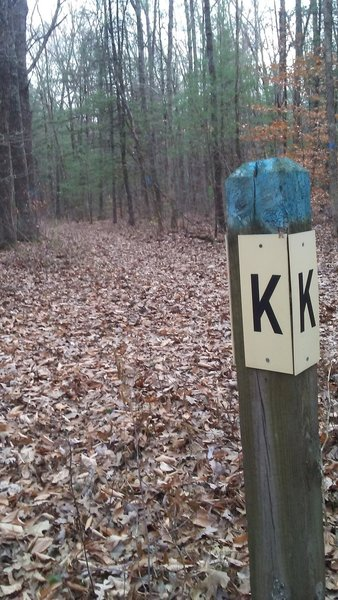 Intersection of H-A-L at the K post on the mountain bike trails in the Allegan State Game Area.