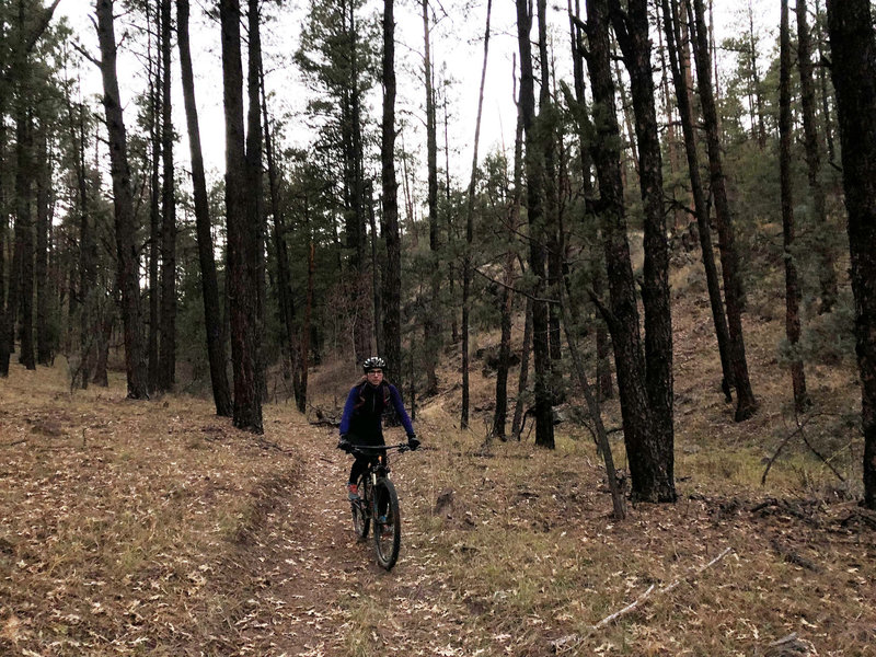 Nearing the forest road on the lower end of the Boyscout Camp Trail