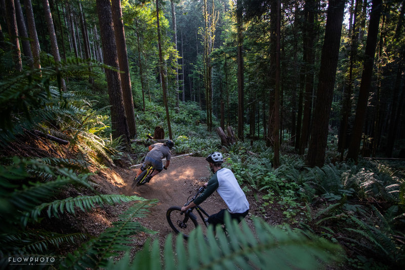 Mesmerizing ferns and old growth surround the lower section of the Olallie trail.