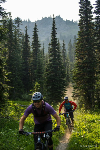 The trail is unique as it has multiple microclimates in it. This is the first of three subalpine meadows.