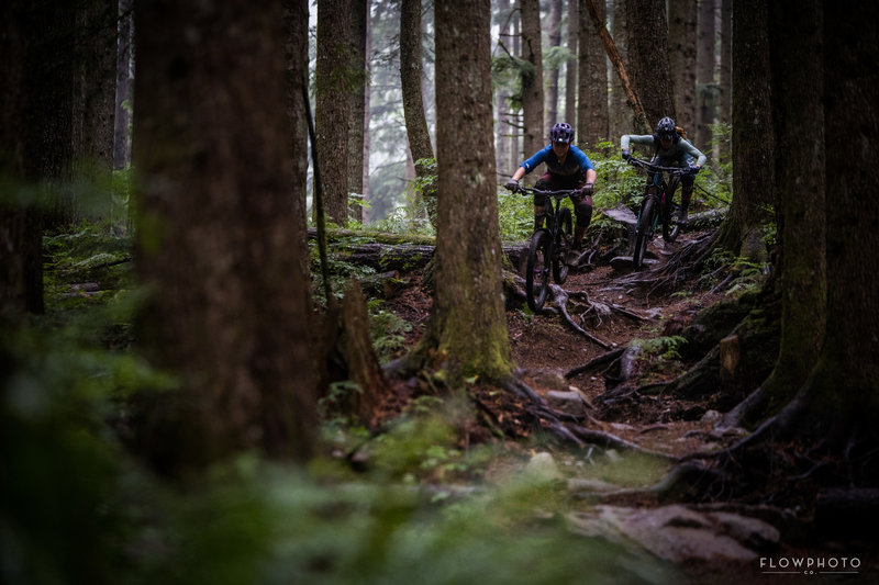 Roots roots roots. This trail is full of tech and chunder.