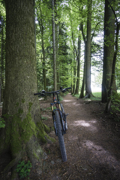 Easy trail near Zavelstein.