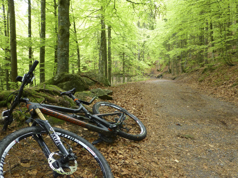 Typical forest road in the Schwarzwald (Black Forest).