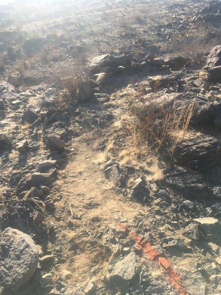 New Miners trail.