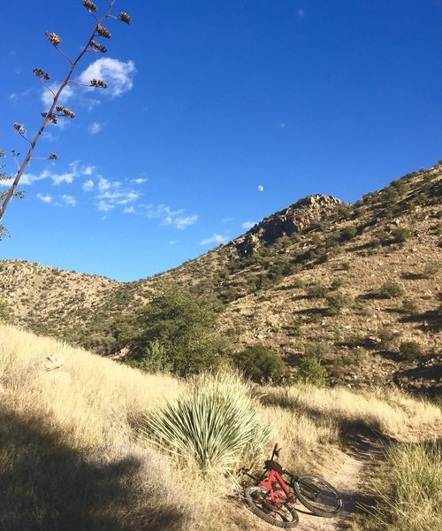 Molino Basin trail near campground