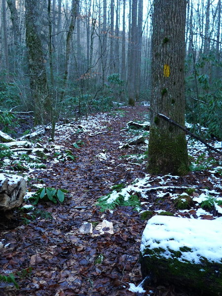 Chief Benges Scout Trail