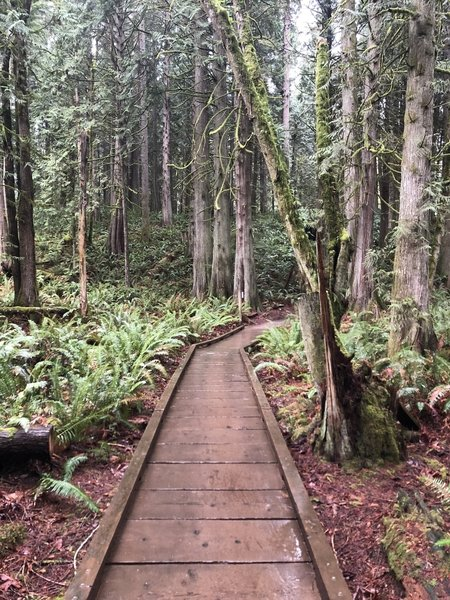 Bridge along the Grand Ridge Trail.