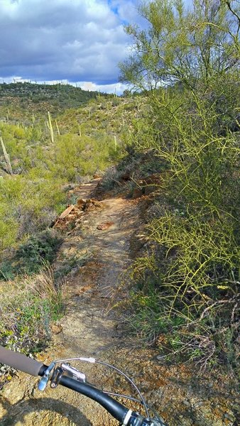 Resuming singletrack after the road section
