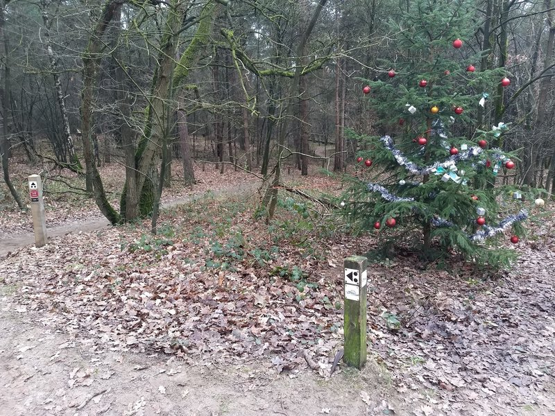 Starting point of the Drost trail. Picture taken in the christmas holiday (obviously)