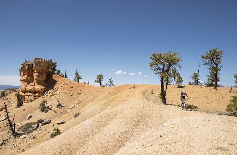 Desert Biking on Rich Trail.