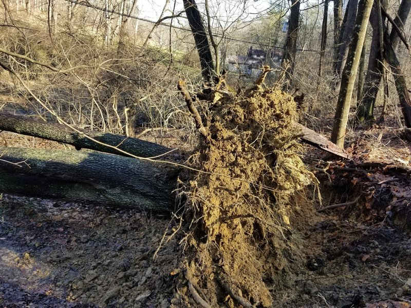 Tree down on the new Girl Scout Trail
