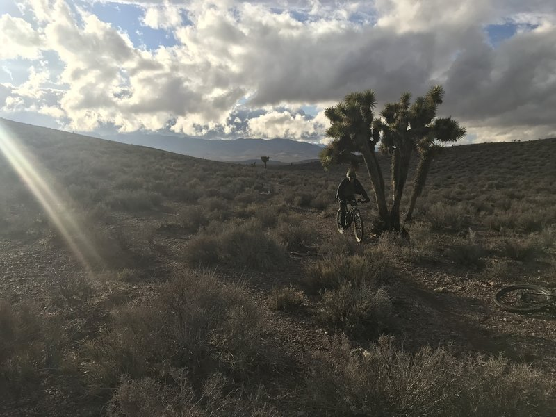Low branch?   One of the many Joshua Trees in this area.
