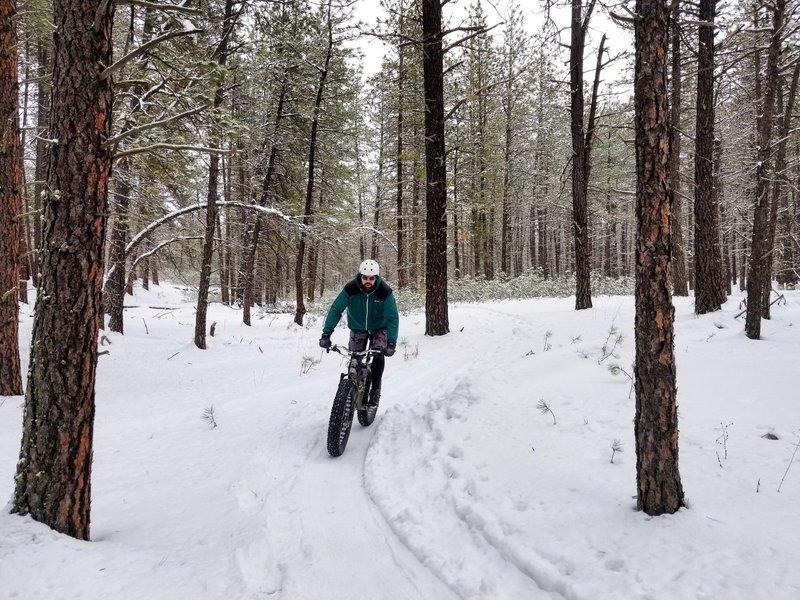 Groomed singletrack for fat biking at Riverside State Park.