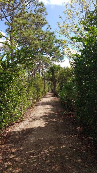 View down Promontory Trail in Grassy Waters Preserve.