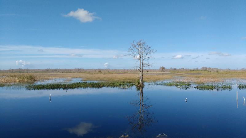 One of many spectacular views from the Grassy Waters Preserve levee greenway or Owahee Trail.