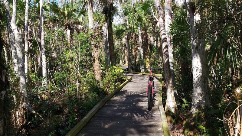Boardwalk on the Hog Hammock trail in Grassy Waters Preserve.